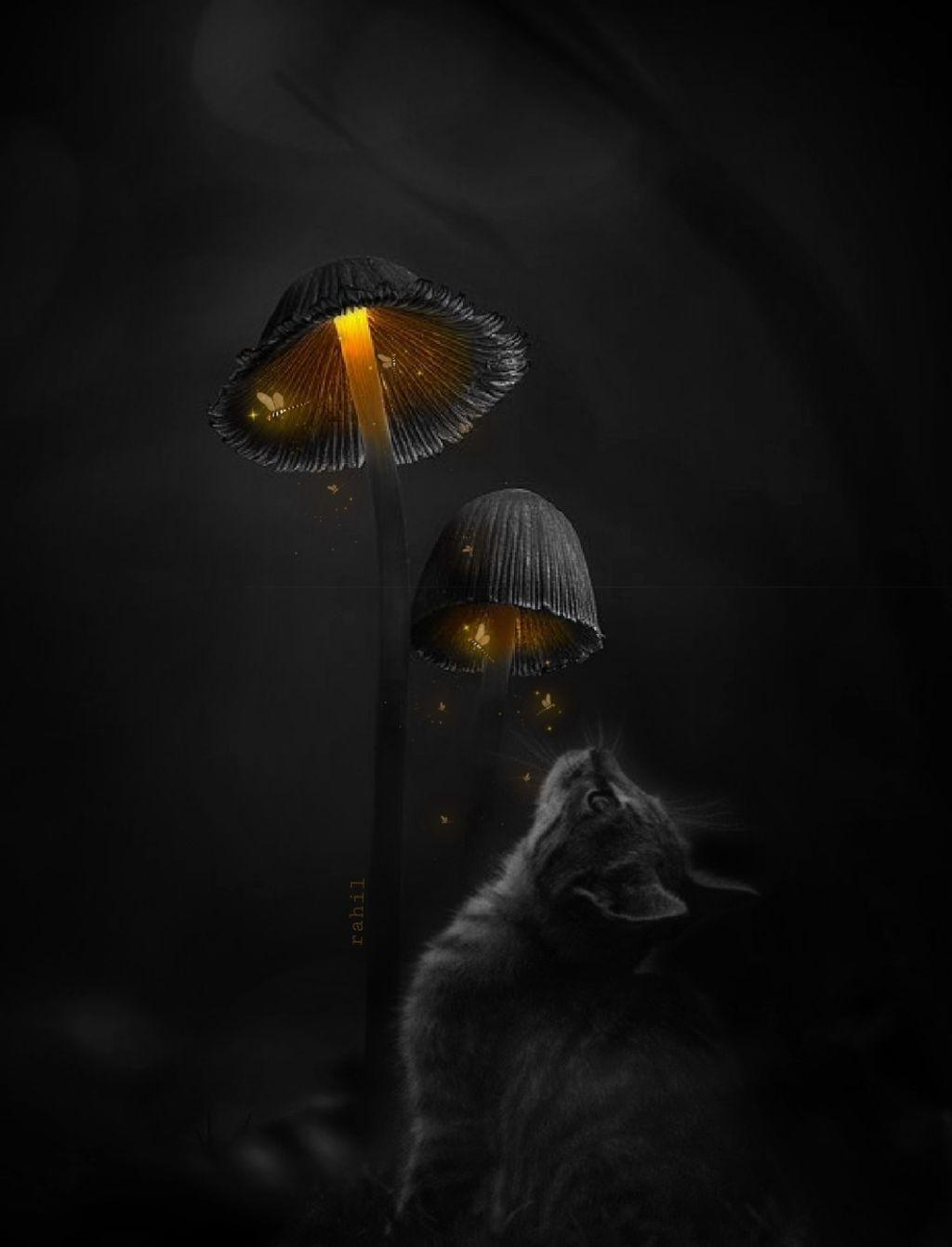 🖤 There is always a light....😊   #freetoedit #doubleexposure #myedit #madewithpicsart #editedbyme #madewithlove #loveediting #surealism #dreamy #cat #animal #lightinthedark  #neverstopdreaming #interesting  #blackandwhite #colorsplash #darkness #darkart #magical  #blackandwhitelover #editstepbystep  Thanks for the great sticker