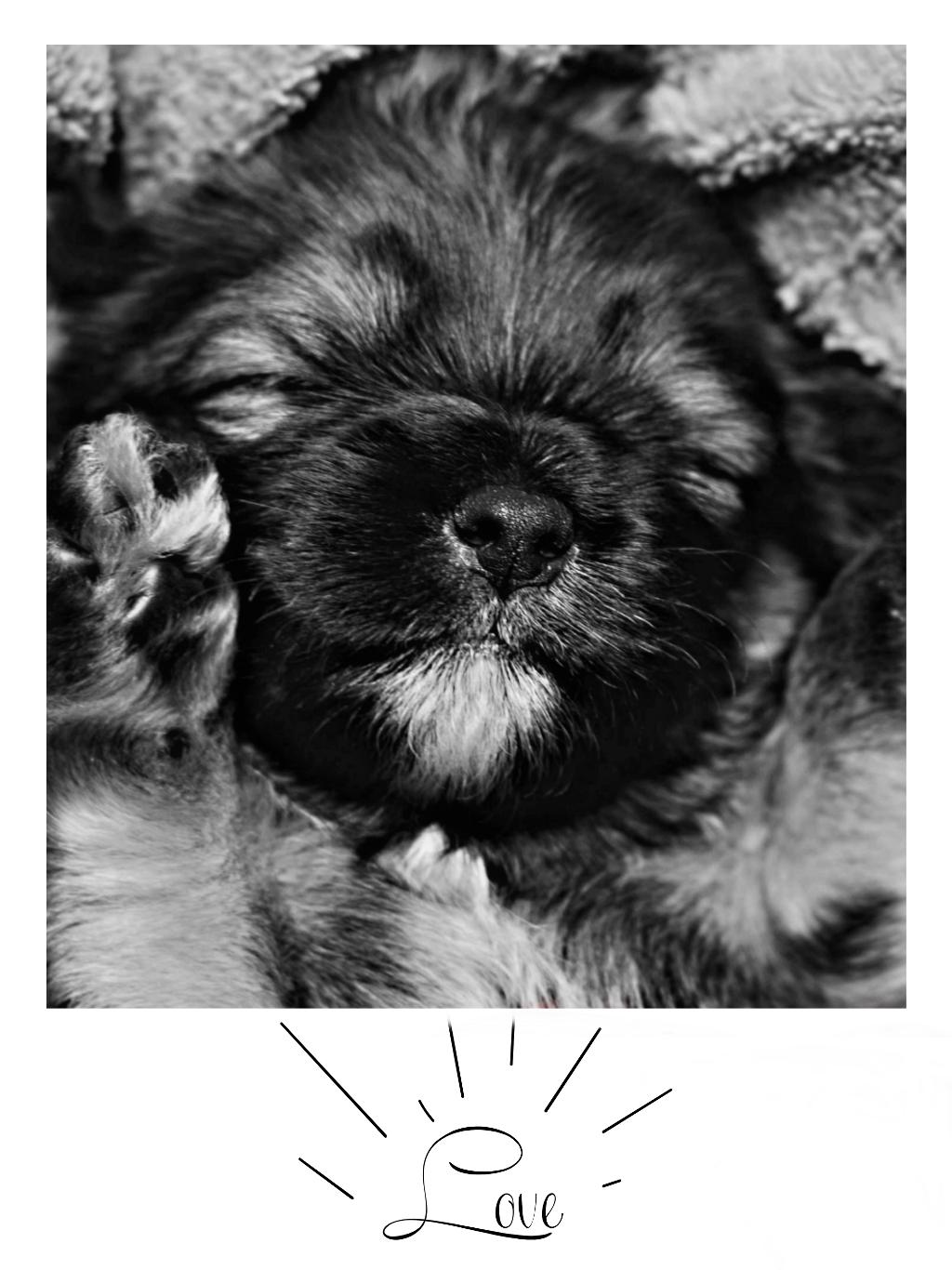 #freetoedit#blackandwhite#photo#photography#dog#animal#sweet#love#nice#lol#sweety#baby#friends#mrlb2000 @pa @freetoedit