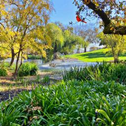 freetoedit outdoors nature naturelover edit