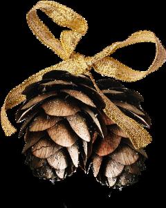 pinecone pinecones gold festive winter freetoedit scpinecone