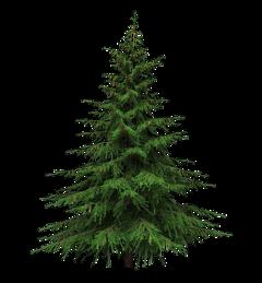 christmastree tree pinetree cedar christmastime freetoedit