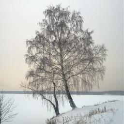 tree landscape winter myphoto nofilter