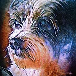 mydog friend art digitalart picsart