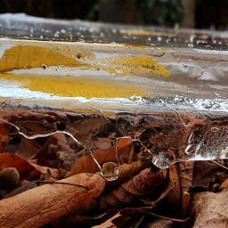 ice blätter leaf dezember winter