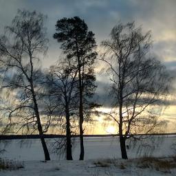 tree sunset landscape winter naturephotography