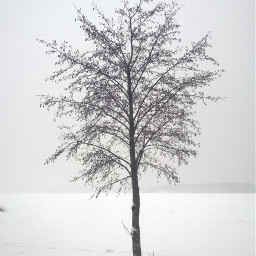 tree snow nature pcwhite white
