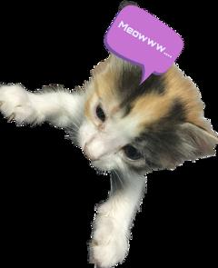 stickers trending trendingstickers cats freetoedit