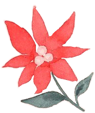 flower christmasflower christmas snow freetoedit