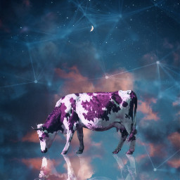surreal surrealism fantasy moon cow freetoedit
