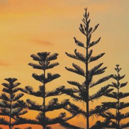 nature endoftheday sunsettime goldenhour trees freetoedit