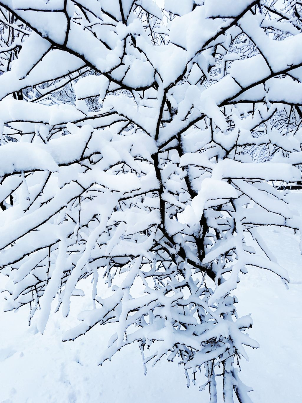 5th place 💙 Thank you all! #winter #snow #naturephotography  #pcwhite #white