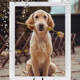 freetoedit polaroid polaroidframe dog cute