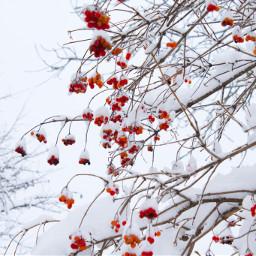 winter winterfeels white