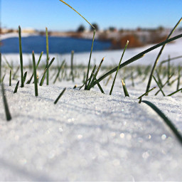 freetoedit snow grass christmas white pcwhite