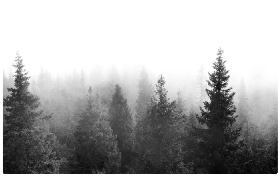 #ftestickers #stickers#forest#trees #blackandwhite #freetoedit