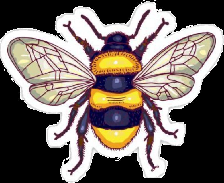 #bee #aesthetic #vsco #honey #freetoedit