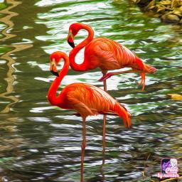 freetoedit coloredmyself flamingos beautiful art