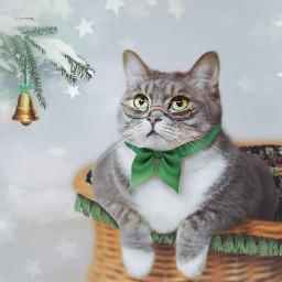 christmas present petsandanimals cat green freetoedit
