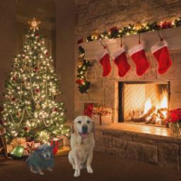 dog dogs perro perros navidad