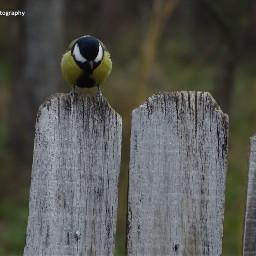 freetoedit followme birds bird birdsphotography