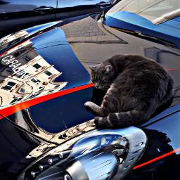 myfoto cat cars reflection mycity