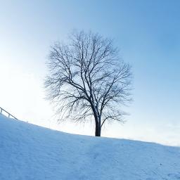 freetoedit myphoto tree winter coldday