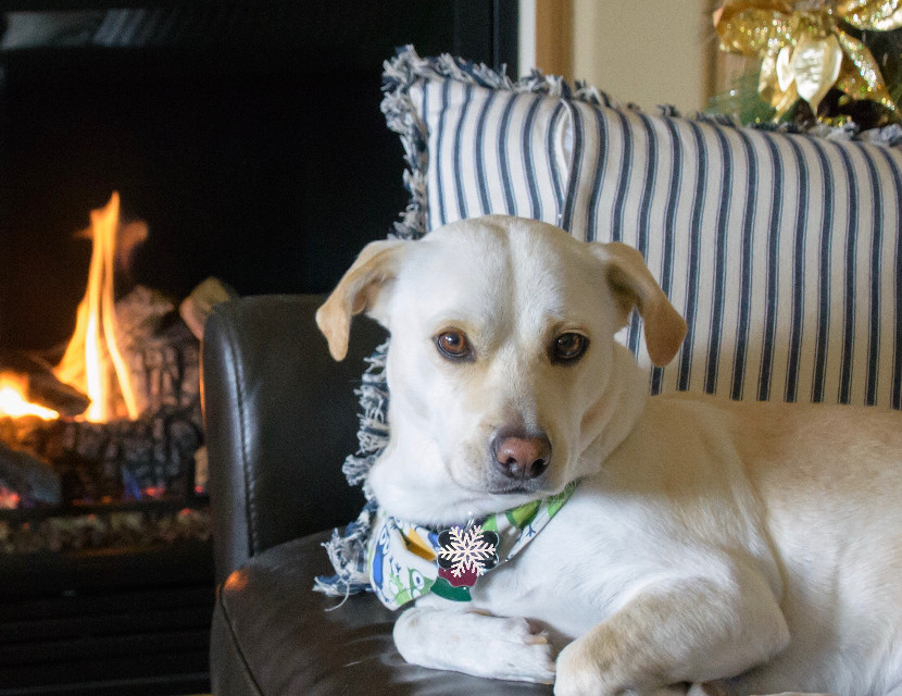 Happy Holidays! #christmas #holiday #doggie