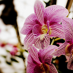 freetoedit ochid greenhouse tropical flower