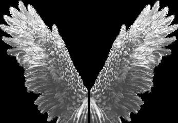 ftestickers stickers wings fly freetoedit