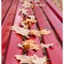 bench parkbank fall leaves autumn freetoedit