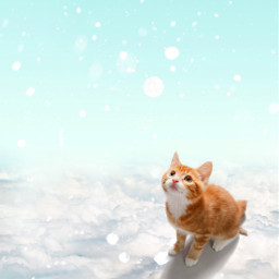 freetoedit background cat snowday
