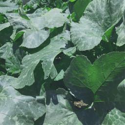 freetoedit green sheets nature leaf