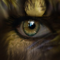 photography myart eye golden look