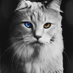 freetoedit cat cats catsagram catstagram