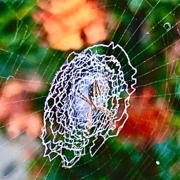 freetoedit myphotography araña animallover nature