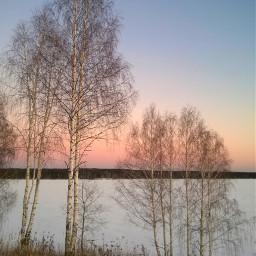 tree winter landscape photography naturephotography