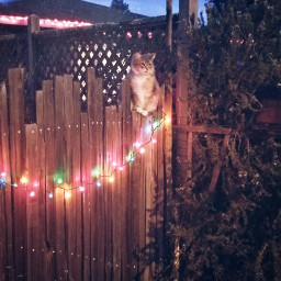 freetoedit christmaskitty holiday cat kitty