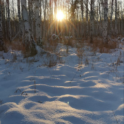 winter woodland photography forest sunrays