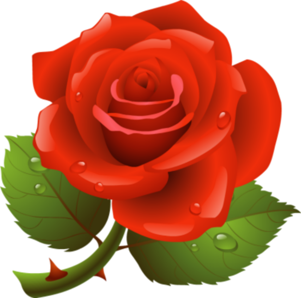 #rose #flower #redrose #raindrops