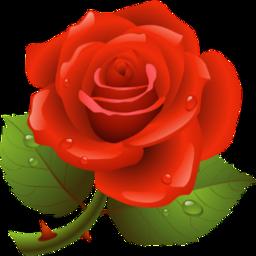 rose flower redrose raindrops freetoedit