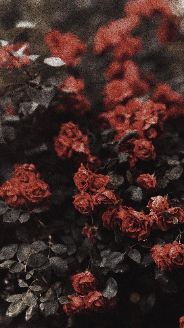 #freetoedit #myphoto #floral #background #rose #floralpattern #remixit #iphonephotography