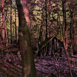 freetoedit remixed woods cabin hueeffect