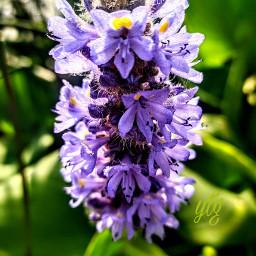 naturephotography waterflower