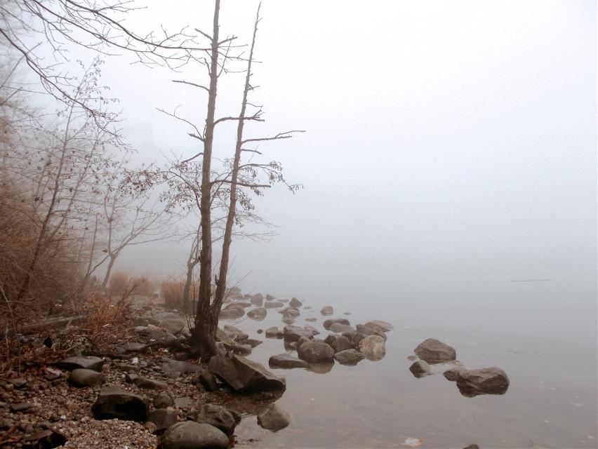 foggy#day#photo#session#fog#winter#mildweather#gloomy#sea#tree #freetoedit