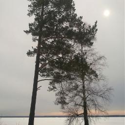 tree landscape winter photography myphotograpy