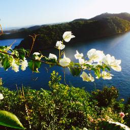 travelphotography island naturephotography seaview flowers