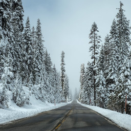 freetoedit 1000fans winter trees шкембогъз