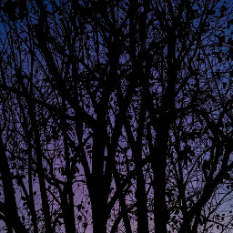 tree bluehour