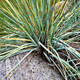 grass stone freetoedit