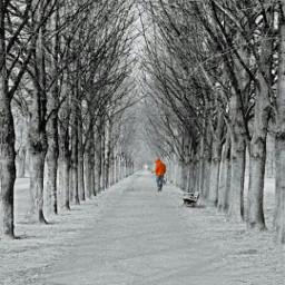 freetoedit winterwonderland outdoors nature snow